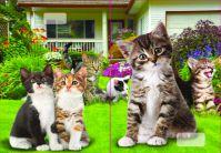 544 Zošit linajkový 8mm s 3D obalom, mačky